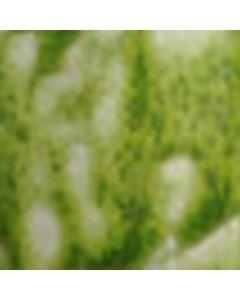 Kiwi Ash 1425